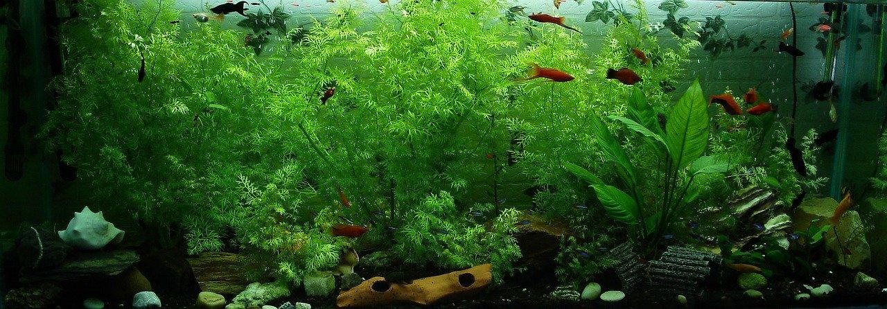 Aquarienfreunde Odenwald e.V.